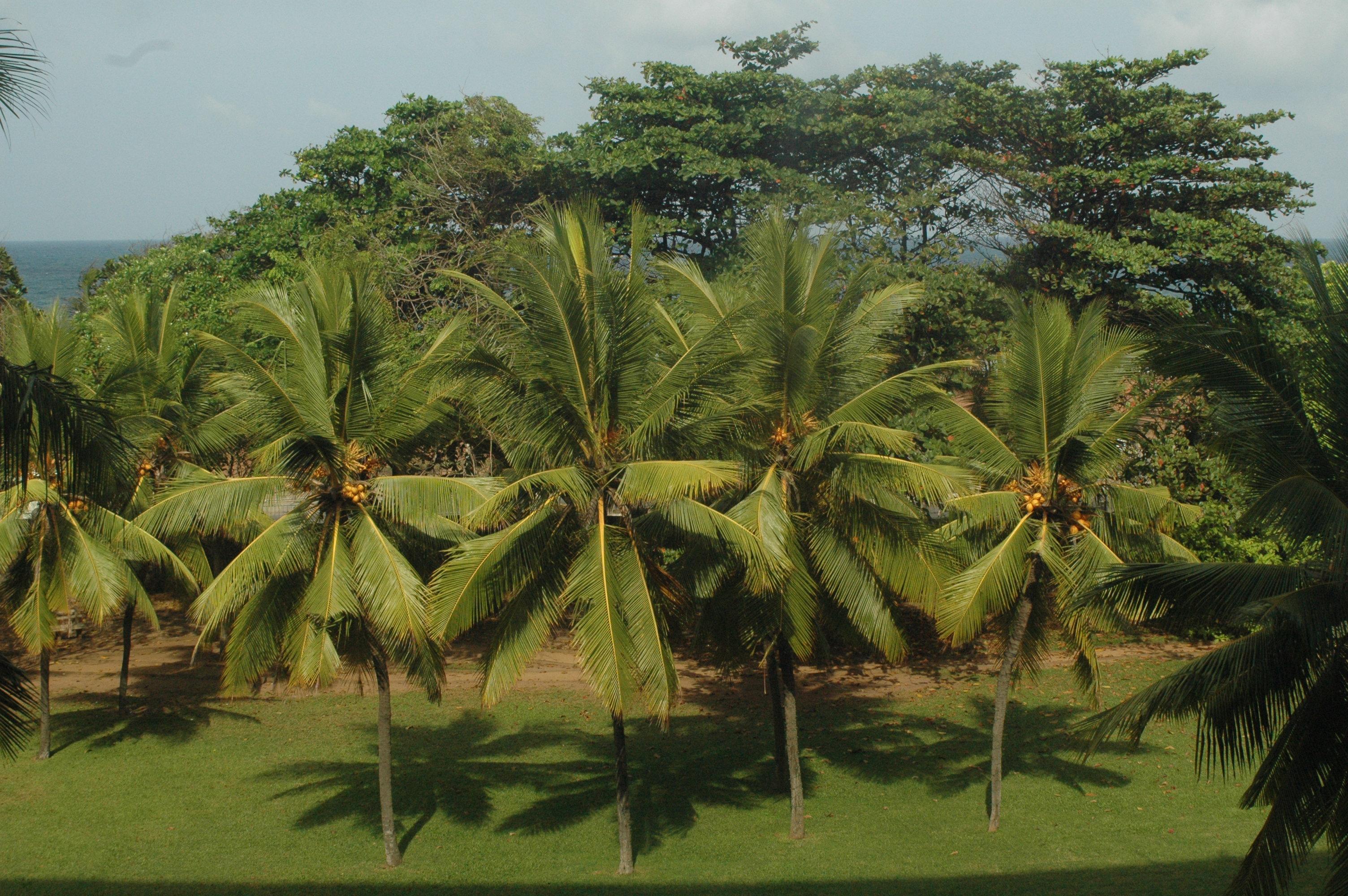 Hotel Taj Samudra Colombo